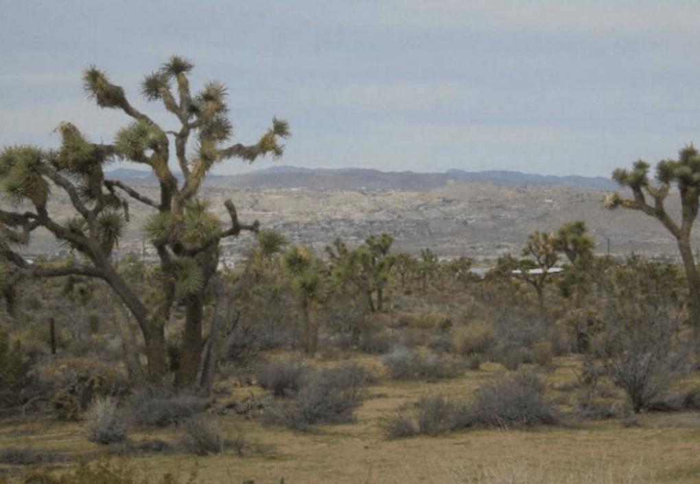Desert scene in California with Joshua trees