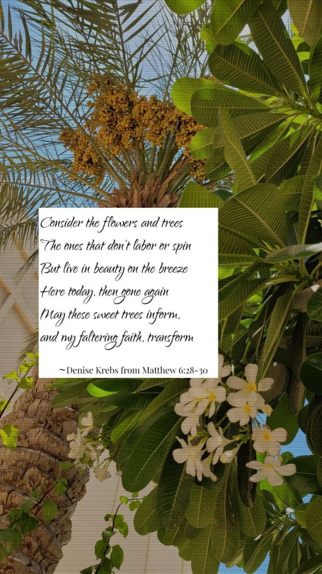 Trees with poem -- Consider the flowers and trees The ones that don't labor or spin But live in beauty on the breeze Here today, then gone again May these sweet trees inform, and my faltering faith, transform ~Denise Krebs from Matthew 6:28-30